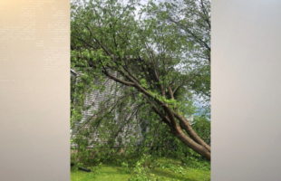 Storm damage reported in the Southern Tier