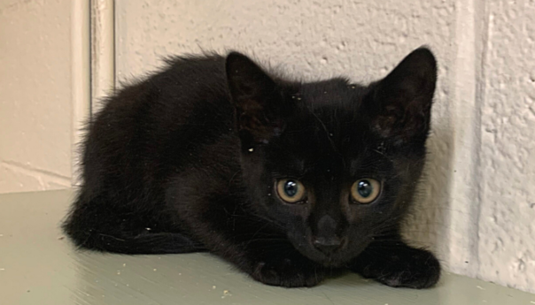 Feral to Friendly: How you can help feral kittens at the Susquehanna SPCA